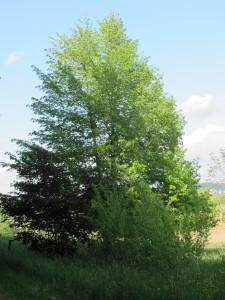 Altenstadt 025