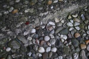 Ameisen, Raupe, 042