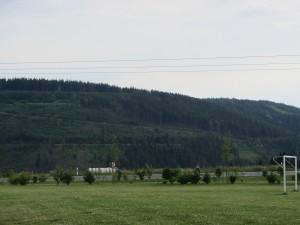 Meura Fohlenschau 002
