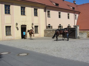 Moritzburg 074