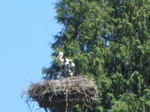 Moritzburg 092