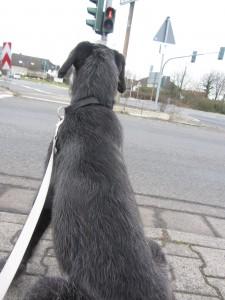 Hund 012