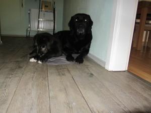 Hund 039