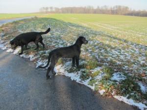 HundSchnee 002