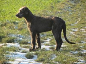HundSchnee 017