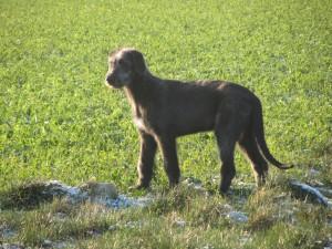 HundSchnee 018