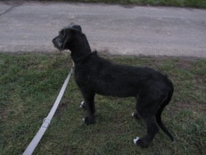 HundWind 002