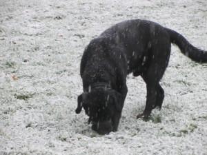 Schnee 005
